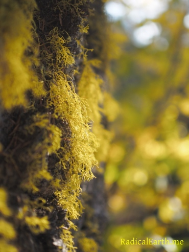 The lichen is in the autumn mood