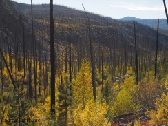 View from the trail on the hike to Deep lake. Previous fire, helps the fall colors really stand out