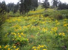 Flowers on the steep Salmon river breaks