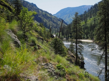 A sunny, and spring green view up river on the Salmon River