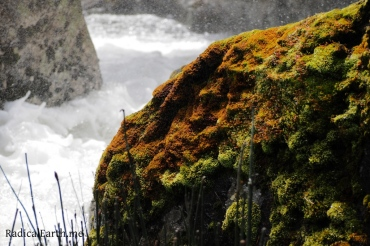 A mossy rock on the Wind River