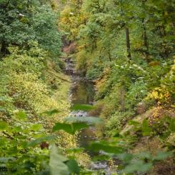 Smith Creek Drainage ~ Silver Falls State Park, Oregon, U.S.A.