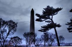 Washington Monument With Pine
