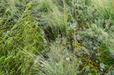 A close up look at the lively ground cover in the Hells Canyon